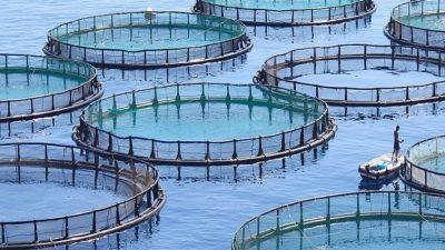 Se depun cererile de finantare pentru Masura IV. 4 – Prelucrarea produselor pescaresti si de acvacultura