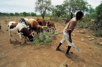 FIDA: 500 de milioane de dolari pentru dezvoltare rurala in Africa