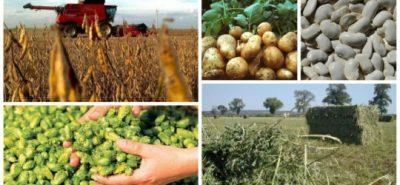 APIA: Beneficiarii de sprijinul cuplat in sectorul vegetal in cadrul Campaniei 2017, au obligatia, ca pana la data de 31 decembrie 2017, sa depuna documentele specifice fiecarui tip de cultura