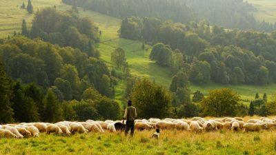 MADR: Noi reglementari privind pasunatul animalelor domestice