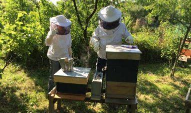 Bani pentru apicultori: 33,4 milioane lei prin Programul national apicol