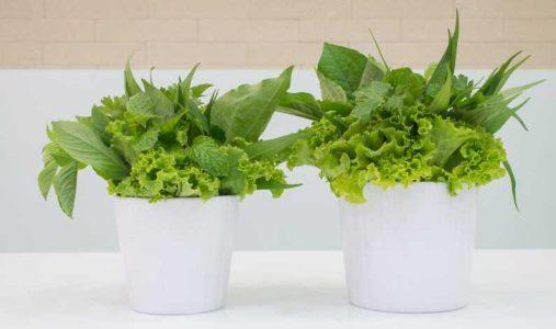 Salata-Bio-Freepik.jpg