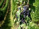 Sibiu, subventii agricole, fermieri, plati, agricultura, seceta