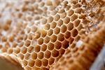 miere de albine, fabrica, fonduri europene, proiect, finantare