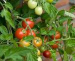 Ialomita, ferma, fonduri europene, finantare, utilaje, legume