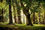 Avrig-Scorei, fonduri europene, conservare, biodiversitate, finantare