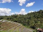 terenuri agricole, prima