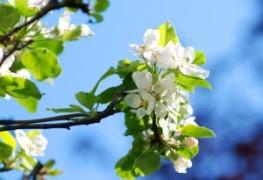 floare1.jpg