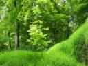 """Schema de ajutor de stat """"Sprijin pentru prima împădurire și crearea de suprafețe împădurite"""""""