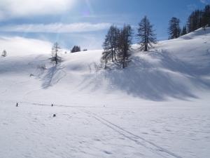Producatorii agricoli afectati de caderile masive de zapada de la inceputul anului vor primi pana la 7500 euro de la stat