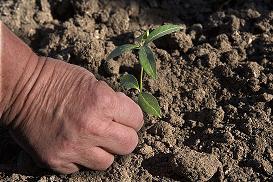 S-a stabilit nivelul primei unice de garantare pentru creditele agricole