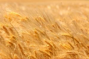 Peste 326 de milioane euro disponibili din septembrie pentru investitii in mediul rural