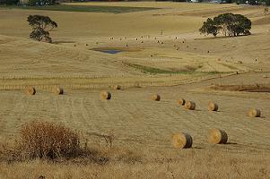 Botanoiu (MADR): Vom veni in sprijinul fermierilor afectati de seceta