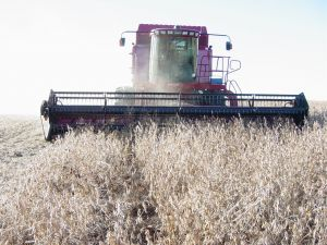 APIA: Peste 25,5 milioane lei au intrat in contul agricultorilor