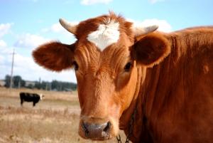 APIA cere producatorilor si comerciantilor de lapte sa-si depuna declaratiile anuale