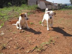 UE vrea sa aloce 27 de milioane de euro pentru cainii fara stapan din Romania