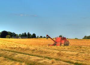 Fermierii mai au doua saptamani sa depuna cererile de sprijin pentru suprafetele cultivate