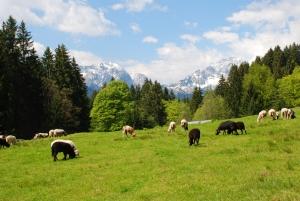 Fermierii din zonele montane defavorizate vor plati impozite reduse, de anul viitor