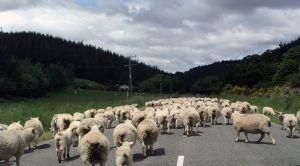 Un fermier din Alba este suspectat de frauda cu fonduri europene pe Masura 112