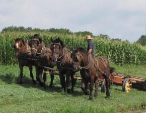Agricover Credit IFN: A explodat cererea de credite pentru fermieri