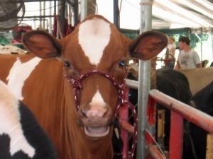Crescatorii de vite din zonele defavorizate primesc subventii de la APIA