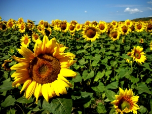 Fermierii au depus peste un milion de cereri pentru subventiile pe suprafate agricole