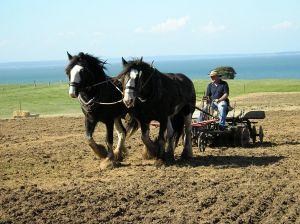 Fermierii vor avea noi ajutoare: camerele agricole judetene