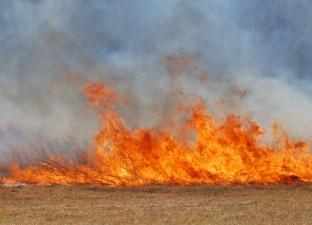 APIA: Fermierii care ard miristile si pajistile risca sa piarda din subventii