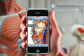 Anatomie_aplicatie.jpg