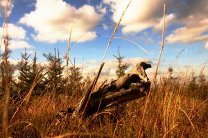 Proprietarii de paduri din arii protejate ar putea primi pana la 500 de euro pe hectar pe an
