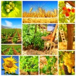management_agricol