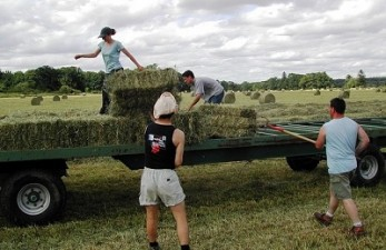Ministerul Agriculturii cere sistarea impozitarii fermierilor pentru subventiile europene