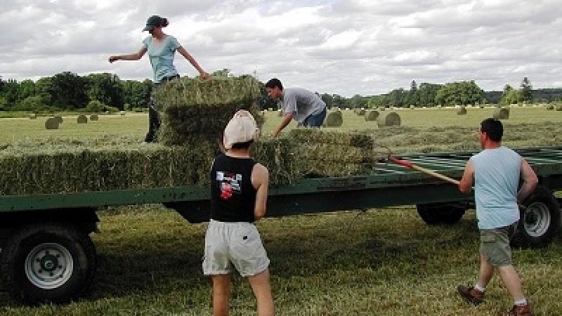 Fonduri europene 2019: Din 22 iulie PFA și SRL vor putea cere câte 15.000 Euro pentru ferme mici