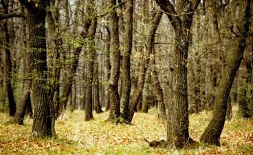 PNDR Masura 8 – Investitii in dezvoltarea zonelor forestiere si ameliorarea viabilitatii padurilor 2014-2020