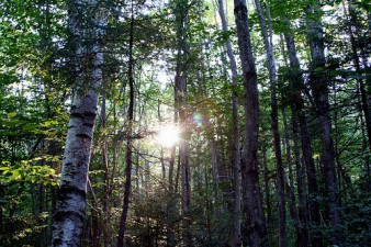 APIA primeste cererile pentru conservarea padurilor