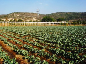 Ministrul Agriculturii: Dorim prelungirea PNDR cu sase luni, pentru a atrage inca 400 milioane euro