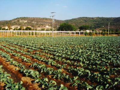 productie-agricola.jpg
