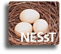 NESsT-Romania.jpg