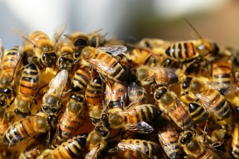 Achim Irimescu: Ministerul Agriculturii pregateste un ajutor financiar pentru apicultori in limita a patru milioane de euro