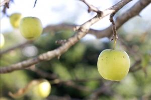 PNDR 2014-2020 – 4.1: Investitii in exploatatii agricole