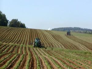 """Se depun proiectele pentru Submasura 4.1 """"Investitii in exploatatii agricole"""