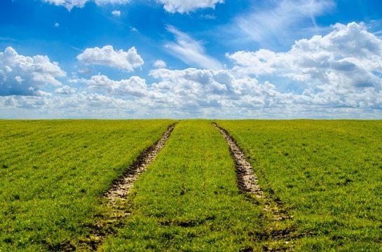 agricultura-MADR.jpg