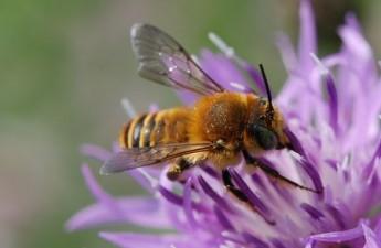 Concurs pentru fermierii care protejeaza albinele