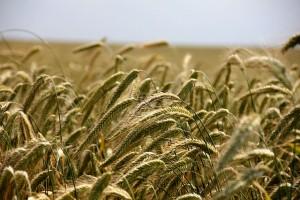 agricultura-caravana