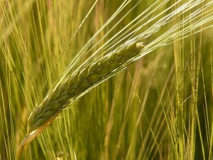 agricultura-finantari