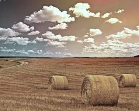 Fermierii afectati de seceta trebuie sa anunte primariile de care apartin pentru a putea primi despagubiri