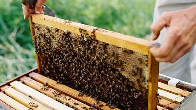 MADR: Sprijin financiar pentru apicultorii afectați de fenomene hidrometeorologice nefavorabile