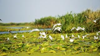 Delta-dunarii-stiri-turism.jpg
