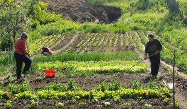 """PNDR: Se pot depune proiecte pentru submasura 9.1. """"Infiintarea grupurilor de producatori in sectorul agricol"""""""