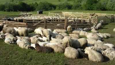 MADR: 32.000 de fermieri s-au inscris la ajutorul pentru comercializarea lanii